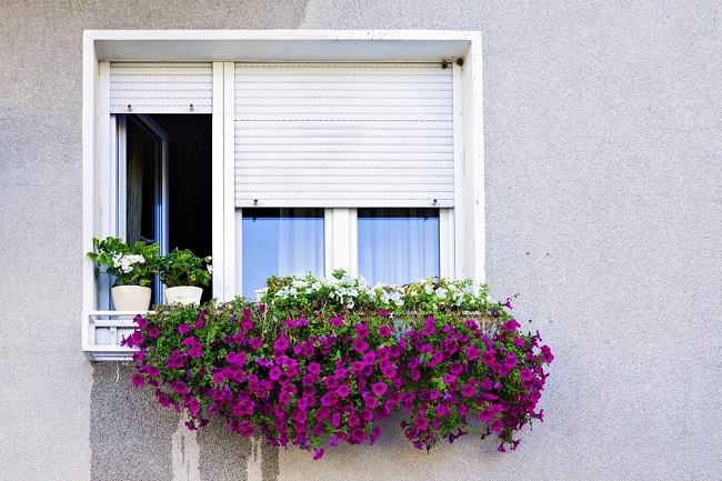 Choose the finest window roller shutters for your home for 12 window shutters