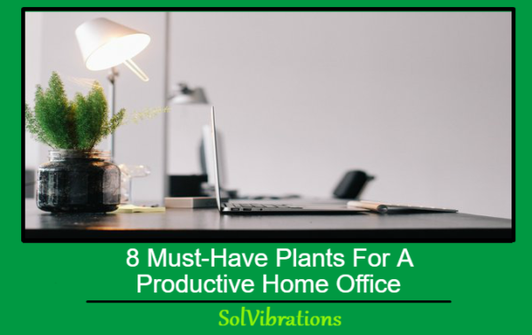 8 Must-Have Plants For A Productive Home Office
