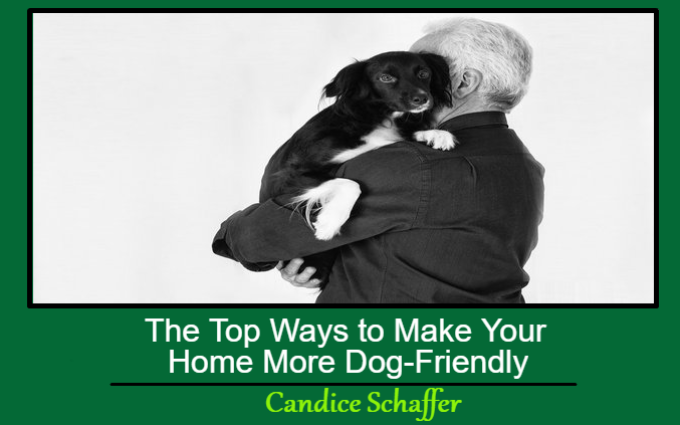 The Top Ways to Make Your Home More Dog-Friendly