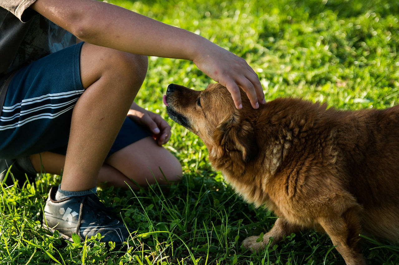 make your home more dog-friendly