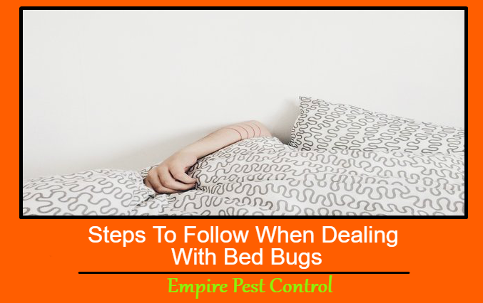 Steps To Follow When Dealing With Bed Bugs