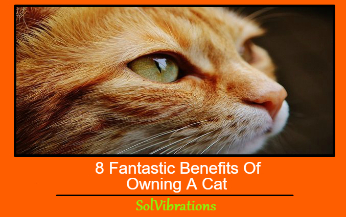 8 Fantastic Benefits Of Owning A Cat