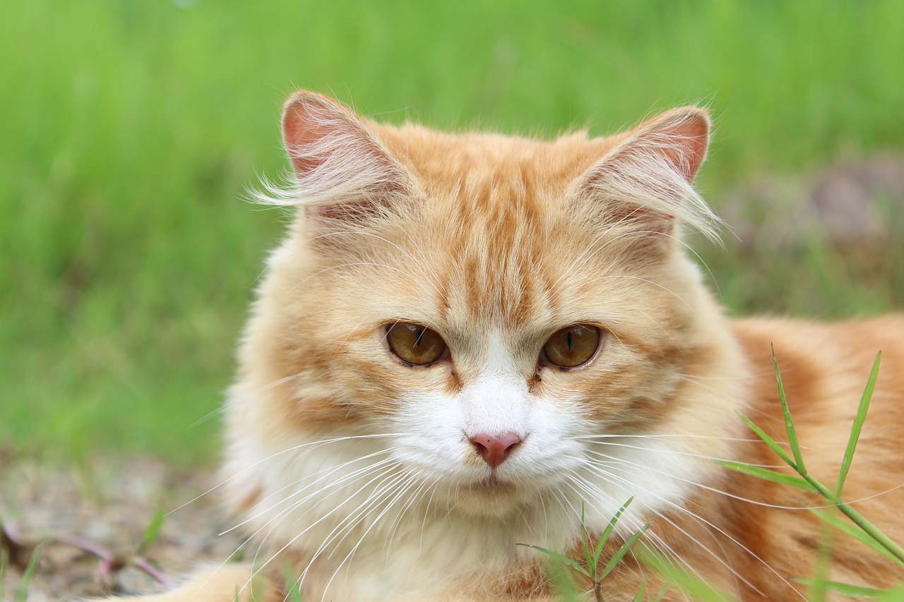 cats drooling sick